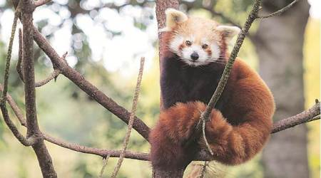 Step away from extinction, four endangered species on rescue list