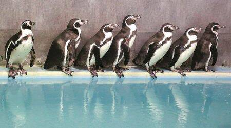 Mumbai's Byculla Zoo to soon cradle India's first penguin