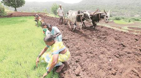 Kisan Call Centre: 'Advisers' mostly rely on own knowledge to guide farmers claimsstudy