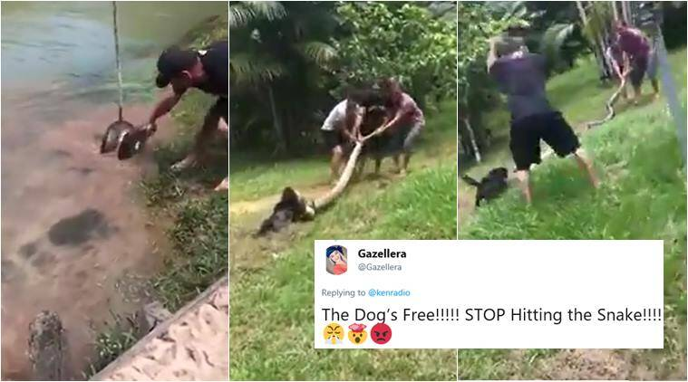 python attack video, python attack dog, dog saved from python, men save dog from snake, snake rescue videos, viral videos, animal videos, indian express
