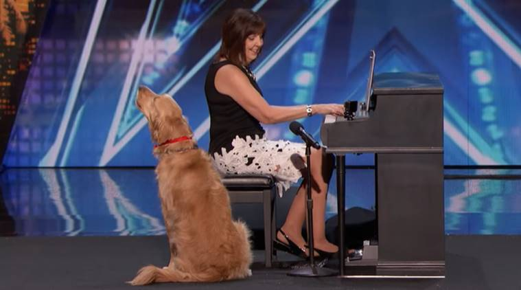 America's Got Talent, singing dog, singing dog viral video, dogs sings with owner, indian express, indian express news