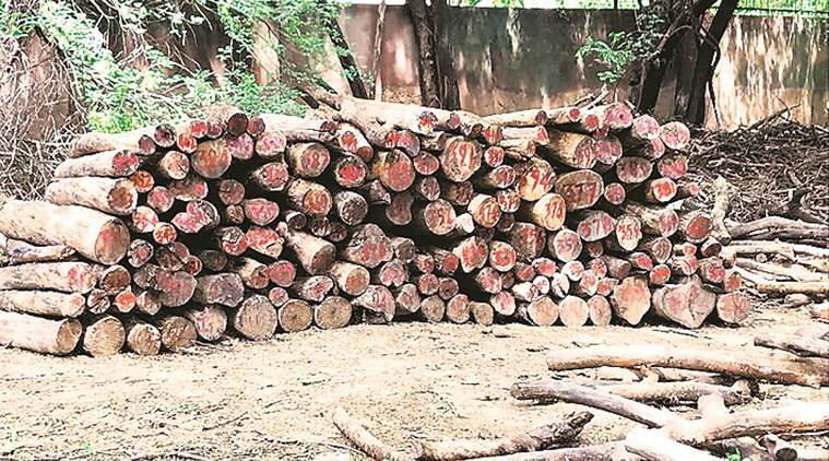 625 logs found buried in pits, police complaint against Delhi Golf Club