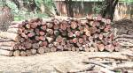 625 logs found buried in pits, police complaint against Delhi GolfClub