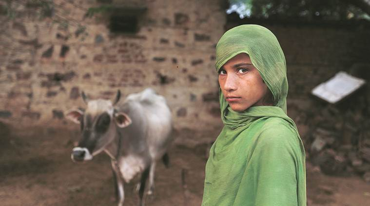 Rakbar's daughter with one of their cows. (Express photo/Gajendra Yadav)