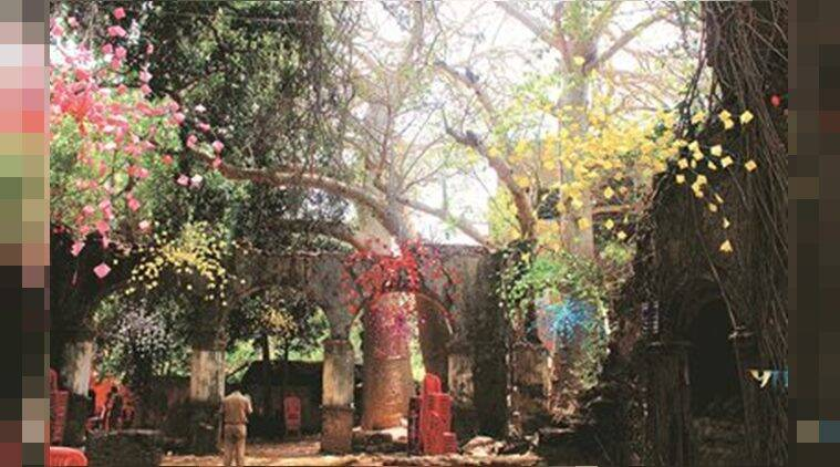 Known to live up to 1,000 years, Baobabs are Mumbai's 'green monuments'