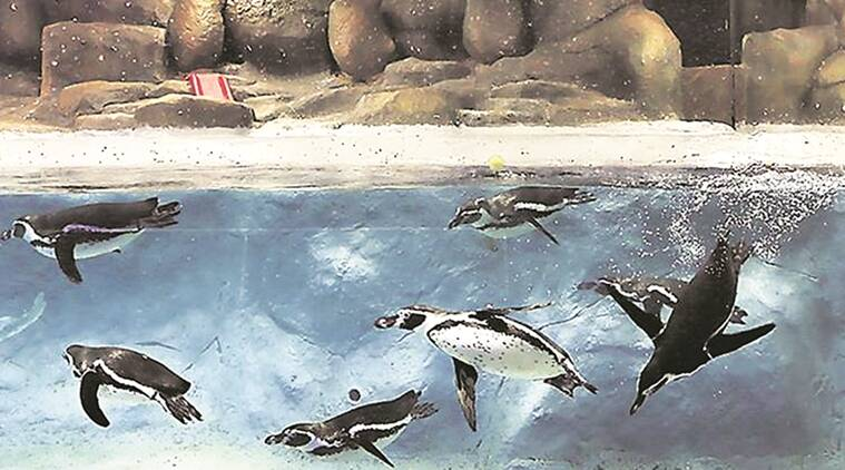 bmc, byculla zoo revamp, sewage treatment plant in byculla zoo, mumbai city news