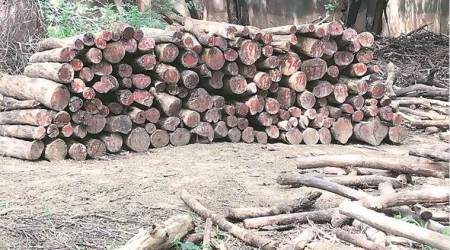 Forest dept finds 2,000 logs in pits at GolfClub