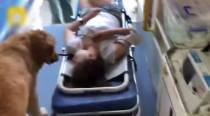 Watch: Woman faints, her dog rides in ambulance to accompany her to hospital