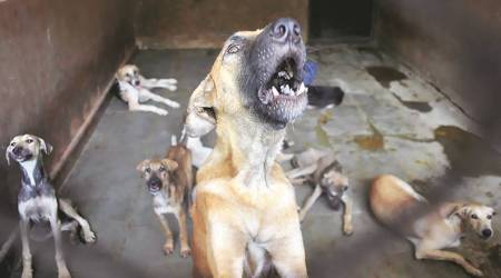 Why PMC's sterilisation efforts fail to contain city's burgeoning stray dog population