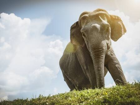 world elephant day, elephant facts, facts for kids