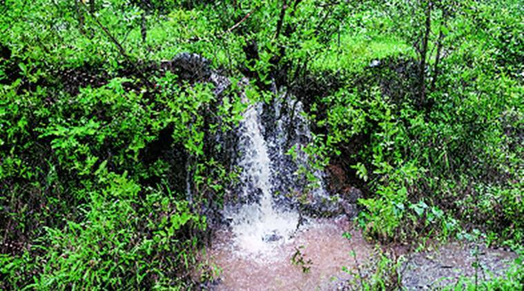 sun, rain, nature, wild, wildlife, forest, jungle, forests of india, animals, birds, indian express, indian express news