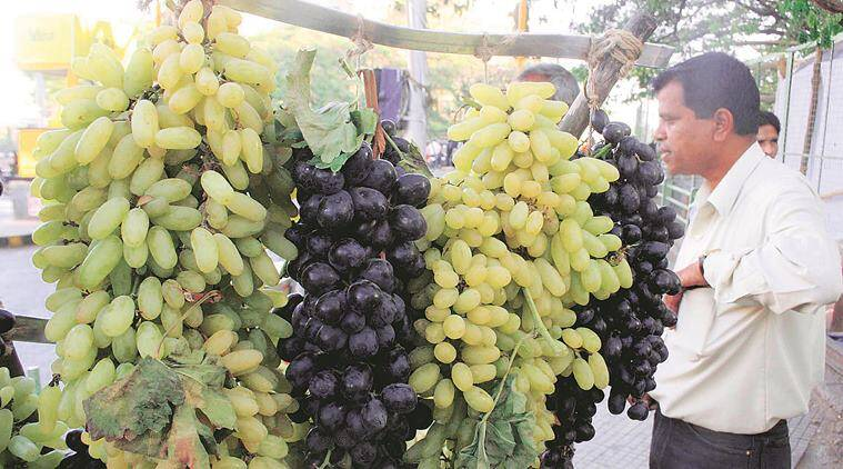 Maharashtra: Grape farmers seek govt boost to expand export markets