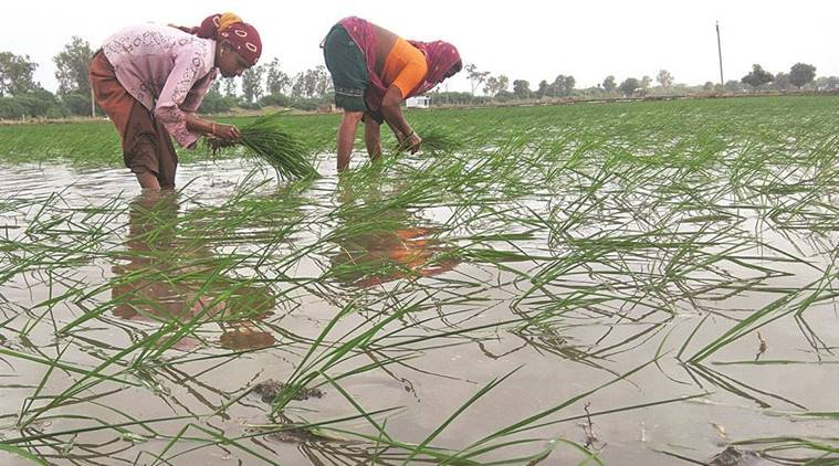 emerging crisis With rainfall deficit, Kharif sowing falls