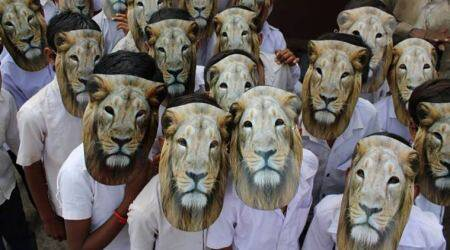 How school children in Gujarat are celebrating 'World Lion Day'