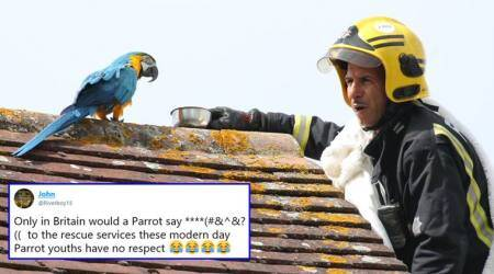 Netizens can't have enough of this parrot who escaped from its home and then abused afirefighter