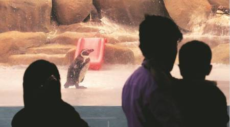 Mumbai: Many visiting zoo for a glimpse of penguin chick return empty-handed