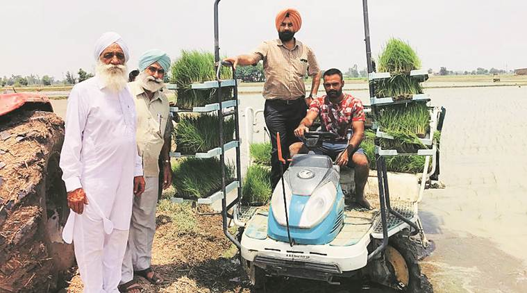 In Punjab, mechanical paddy transplanting finally takes root