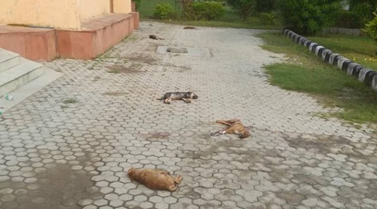 dead puppies in delhi dwarka