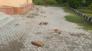 Delhi: Police look for clues in case of seven dead puppies