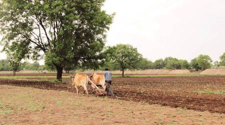 monsoons season, Soyabean farmers, germination failure, Maharashtra news, Indian express news