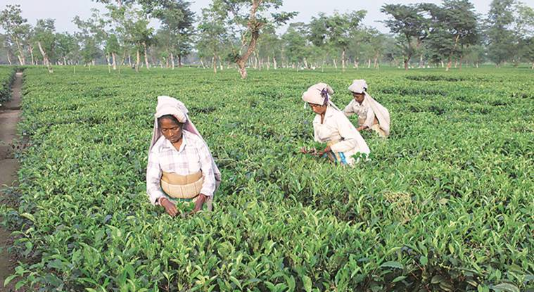 West Negal: On day two of strike, tea garden workers hold rallies, activists speak out in their support