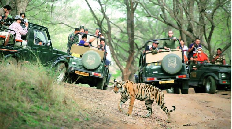 Karnataka, Karnataka night traffic ban tiger reserve, Karnataka tiger reserve, Bandipur Tiger Reserve, tiger reserve night driving Karnataka, national highway, nitin gadkari, indian express