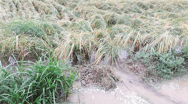 Punjab: Firm up farmer's relief package, says Shiromani Akali Dal