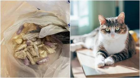 Cat in Bristol brings home bag with suspected class A drugs; Twitterati are amused