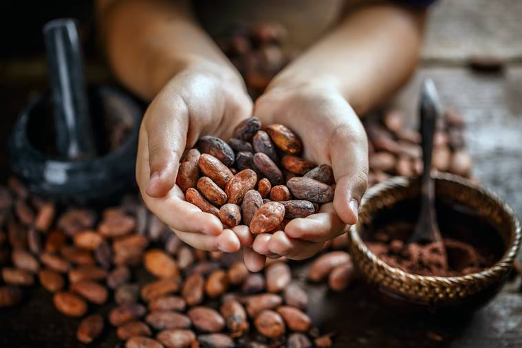history of chocolate, chocolate origin, chocolate birthplace, old chocolate recipes, chocolate journey, where was chocolate found, indian express, indian express news