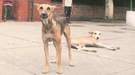 PMC shortlists 4 agencies for vaccination, sterilisation of stray dogs