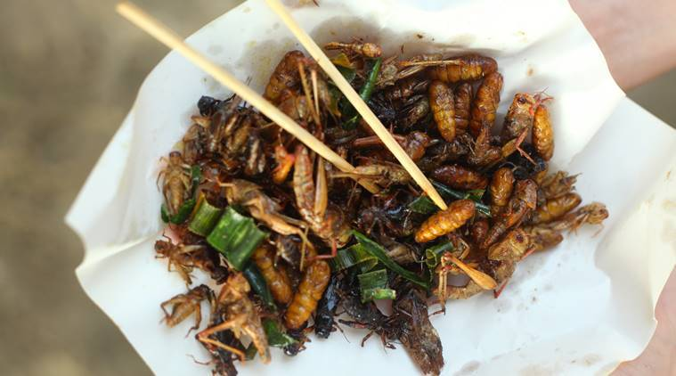 insects food, worm food, insect diet, insect protein source, eating insects, eating worms, indian express, indian express news