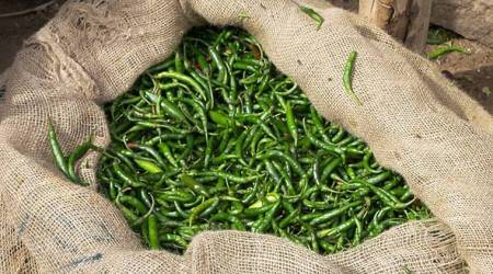 From weight loss to fighting cold: Here's why you should add green chillies to your diet