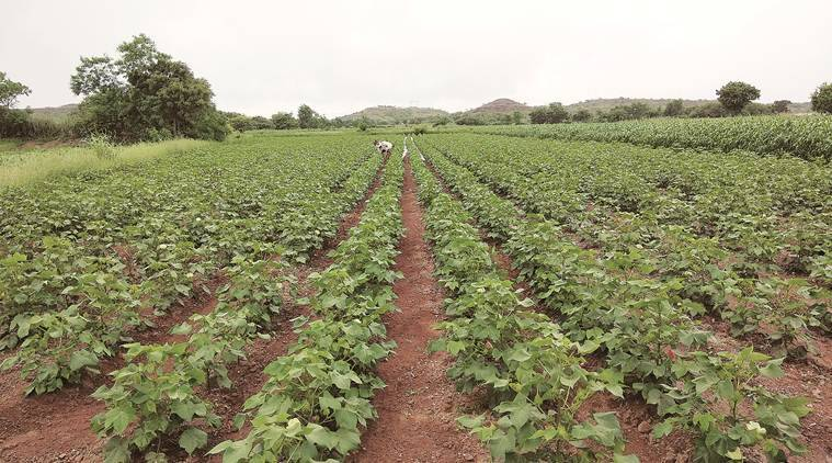 Maharashtra govt plans to use drones in agriculture