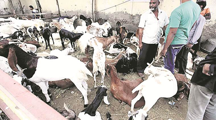 Had withdrawn consent given to mechanised vessels to ferry livestock: DG submits in Gujarat HC