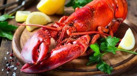 restaurant gets lobsters high on marijuana before killing them, lobster, marijuana, lobster smokes marijuana, indian express, indian express news