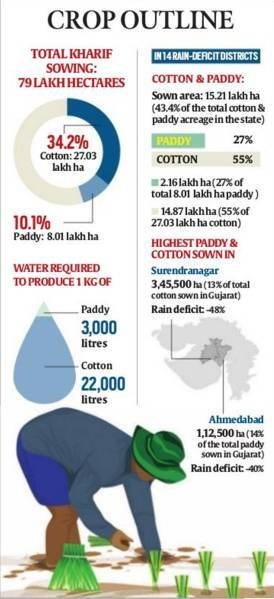 Kharif crops in Gujarat, Kharif crop cotton and paddy, water intensive crop cotton and paddy, Gujarat agriculture, Gujarat irrigation, Sardar Sarovar Narmada Nigam Limited, gujarat monsoon, Gujarat agriculture, Ahmedabad, Indian Express