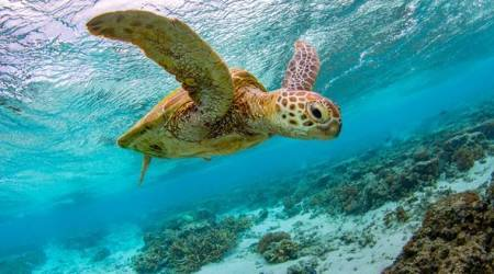Sea turtles can live for more than 80 years, but just one piece of plastic can killthem