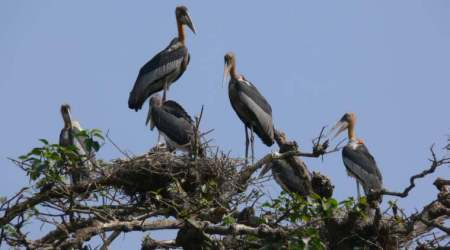 Guwahati counts its 'ugly old bird' annually — and this yearit's goodnews