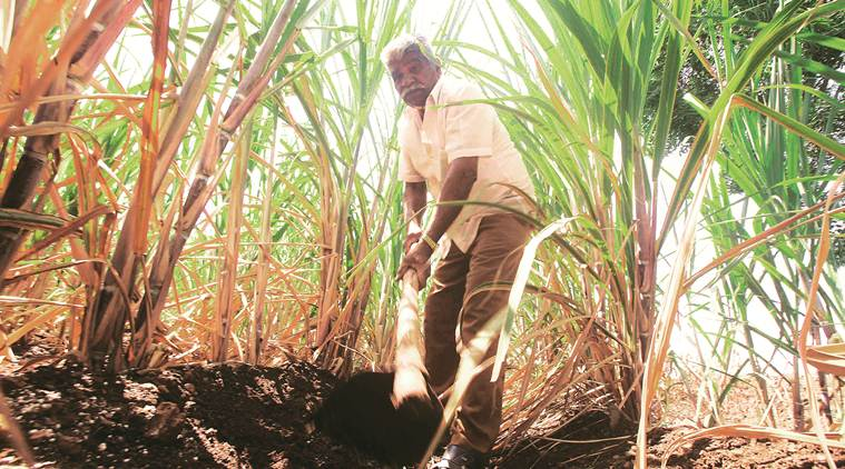 Maharashtra: Cash-strapped sugar mills issue notices for