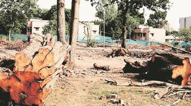 Golf Club 'tree felling' case transferred to crime branch, forest officials to help with investigation