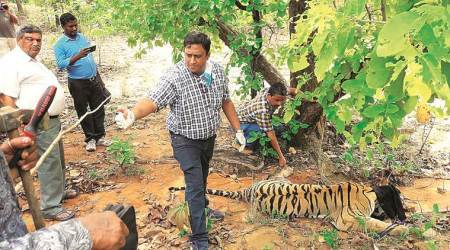 Conservation from the Margins, wildlife in India, Book review, Indian Express
