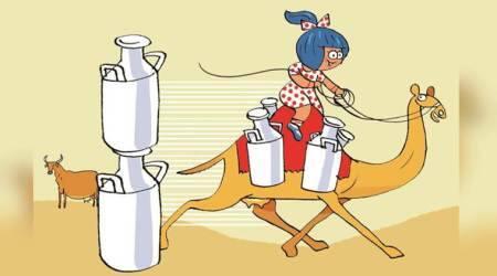 This Diwali, Amul to launch fresh 'deodorised' camel milk inAhmedabad