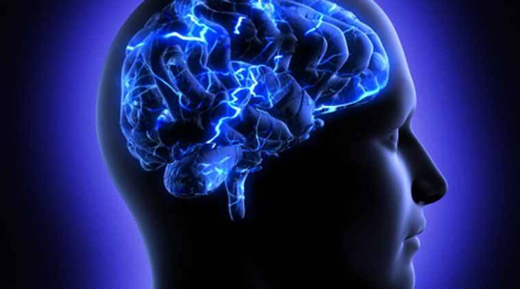 brain health, brain study, brain study latest, brain study on choice, brain studies latest news, indian express, indian express news