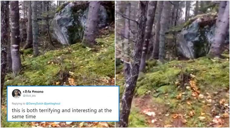 breathing forest, is the forest breathing, viral forest breathing video, video of forest,
