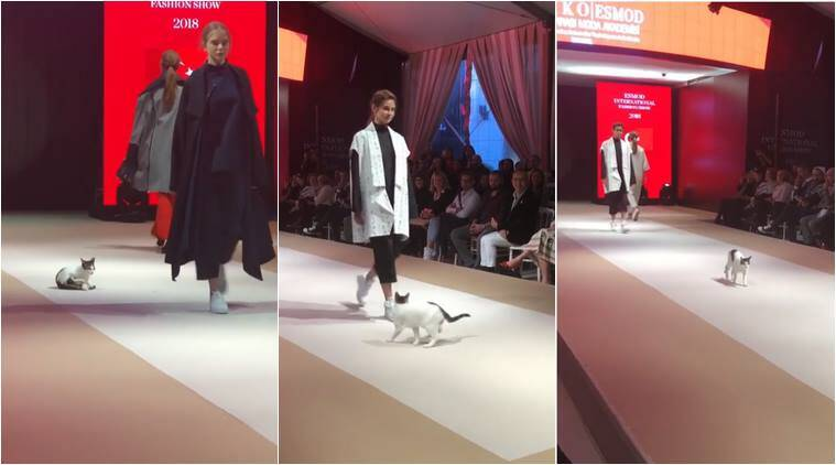 This stray cat who crashed a fashion show is my favorite supermodel