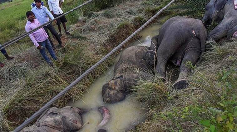 A herd of 13 jumbos were passing through the village in Sadar Forest Range when seven of them came in contact with a sagging 11-KV line andwas electrocuted.(PTI)