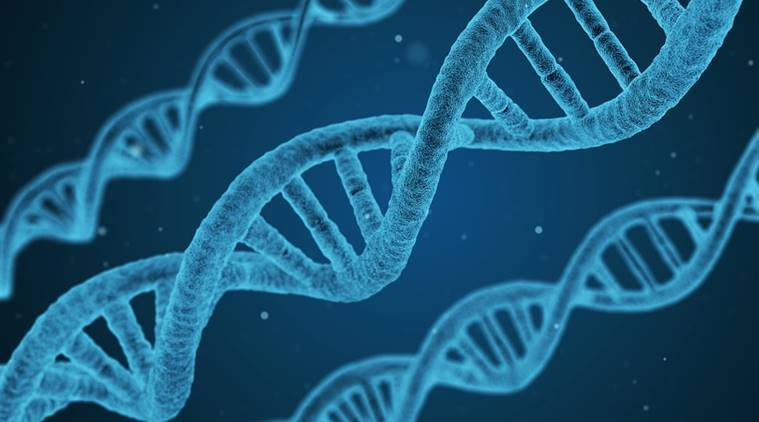 genes study, genetic study, latest study on genes, genes decide university, genes importance, genes study latest updates, indian express news, indian express