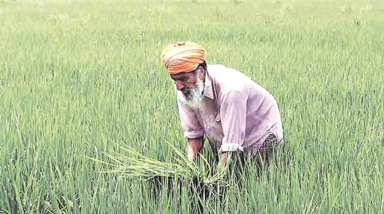 kharif crops, kharif season, Dadasaheb Bhuse, Maharashtra news, Indian express news