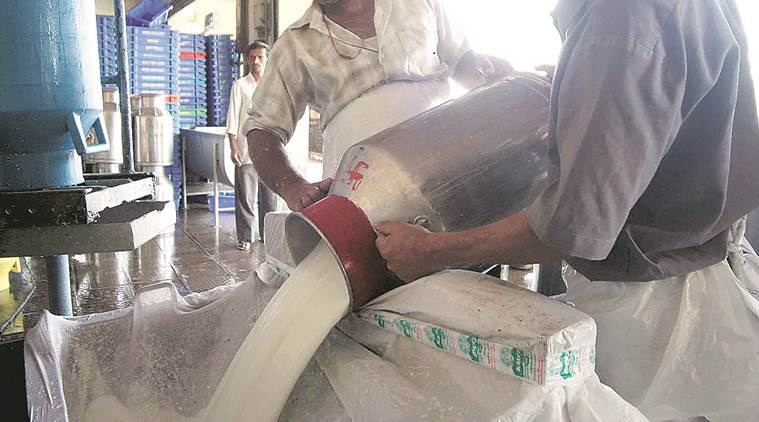 Maharashtra: Boosted by govt subsidy, export of skimmed milk powder takes off