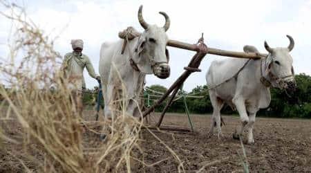 Marathwada region: Rabi sowing dips amid acute water stress